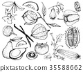 Hand Drawn of Gourd and Squash Fruits 35588662