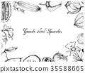Hand Drawn of Gourd and Squash Fruits Frame 35588665