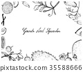 Hand Drawn of Gourd and Squash Fruits Frame 35588666