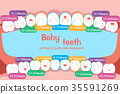 baby tooth chart 35591269