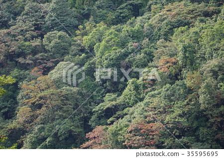 樹 35595695