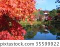 푸른, 가을, 교토시 35599922