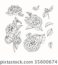 Camellia flower drawing. 35600674