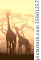 動物 長頸鹿 野生生物 35601257