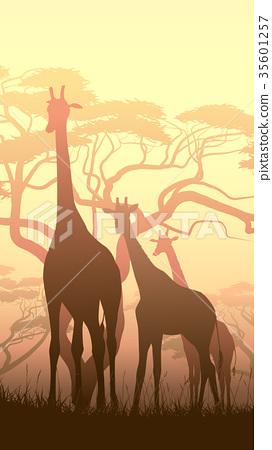 llustration of wild giraffes in African savanna 35601257
