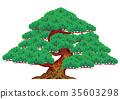 松樹 樹木 樹 35603298