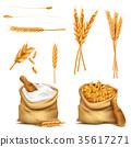 grain vector cereal 35617271