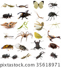 group of european insects 35618971
