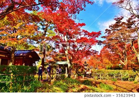 秋葉的長岡庭院留下槭樹庭院風景 35623943