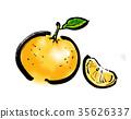夏蜜柑 水果 橙色 35626337