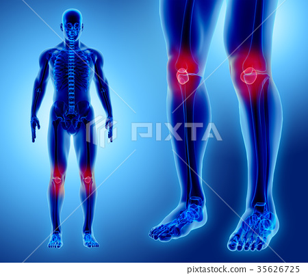 3D illustration of Patella, medical concept. 35626725