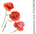 Poppy Flowers digital painting 35628628