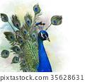 Portrait of Peacock watercolor 35628631