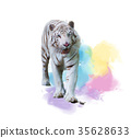 White Tiger Watercolor painting 35628633
