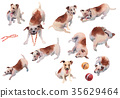 JackRussel terier dog collection hand drawing 35629464