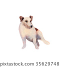 JackRussel terier dog puppy hand drawing 35629748