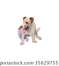 JackRussel terier dog puppy hand drawing 35629755