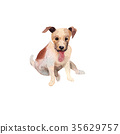 JackRussel terier dog puppy hand drawing 35629757