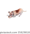 JackRussel terier dog puppy hand drawing 35629818