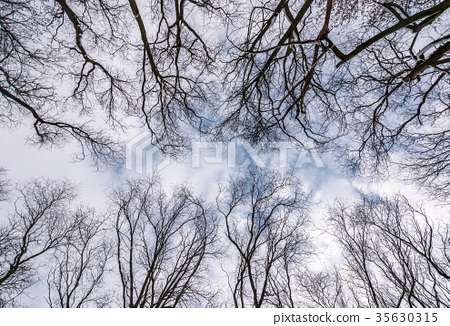 branches of naked trees under the winter sky 35630315