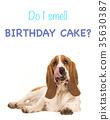 Do I smell birthday cake as a birthday card 35630387