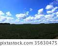 Sky, clouds and soybean fields (USA, Ohio) 35630475