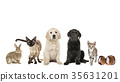 Group of variety of pets 35631201