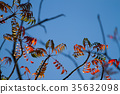 goby, wax, tree 35632098