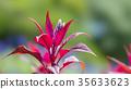 식물, 클로즈업, 확대 35633623
