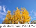 ธรรมชาติ,ทัศนียภาพ,ภูมิทัศน์ 35634252