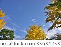 ธรรมชาติ,ทัศนียภาพ,ภูมิทัศน์ 35634253