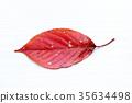 낙엽, 벚꽃, 잎 35634498