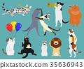 貓的派對顏色 35636943