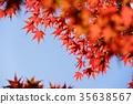 단풍 프레임 (배경 푸른 하늘) 1 35638567