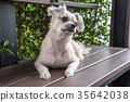 Dog sitting in cafe looking at something 35642038
