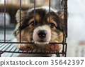 Puppy in cage dog with sadness 35642397