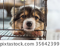 Puppy in cage dog with sadness 35642399