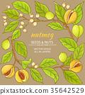 herb, nutmeg, natural 35642529