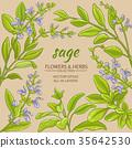 sage vector frame 35642530