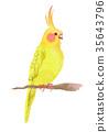 凤头鹦鹉 鹦鹉 金刚鹦鹉 35643796