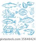 鱼 海鲜 海 35646424
