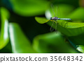 insect dragonfly close-up 35648342