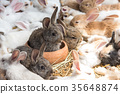 Group of Rabbit resting in pet shop and wait buyer 35648874