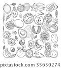 Tropical fruits. illustration, doodle set 35650274