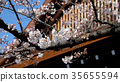 yasukuni shrine, cherry blossom, cherry tree 35655594