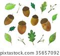 도토리, 나무열매, 식물 35657092