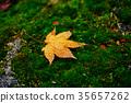 maple, autumn, autumnal 35657262
