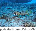 물고기, 생선, 바다 35659597