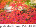 단풍 나무 단풍 35664839