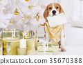 Beagle dog with a greeting card 35670388